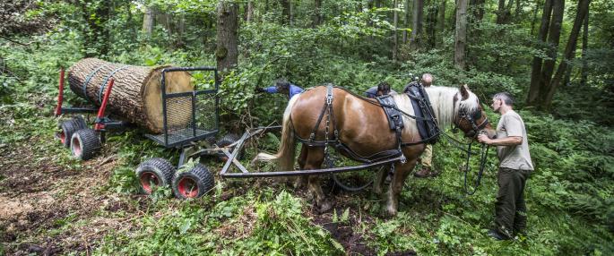 heavy_horse-surrey wildlife