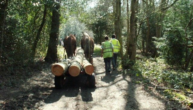 Horse Powered Timber Extraction - Daniel Brown Surrey Hills