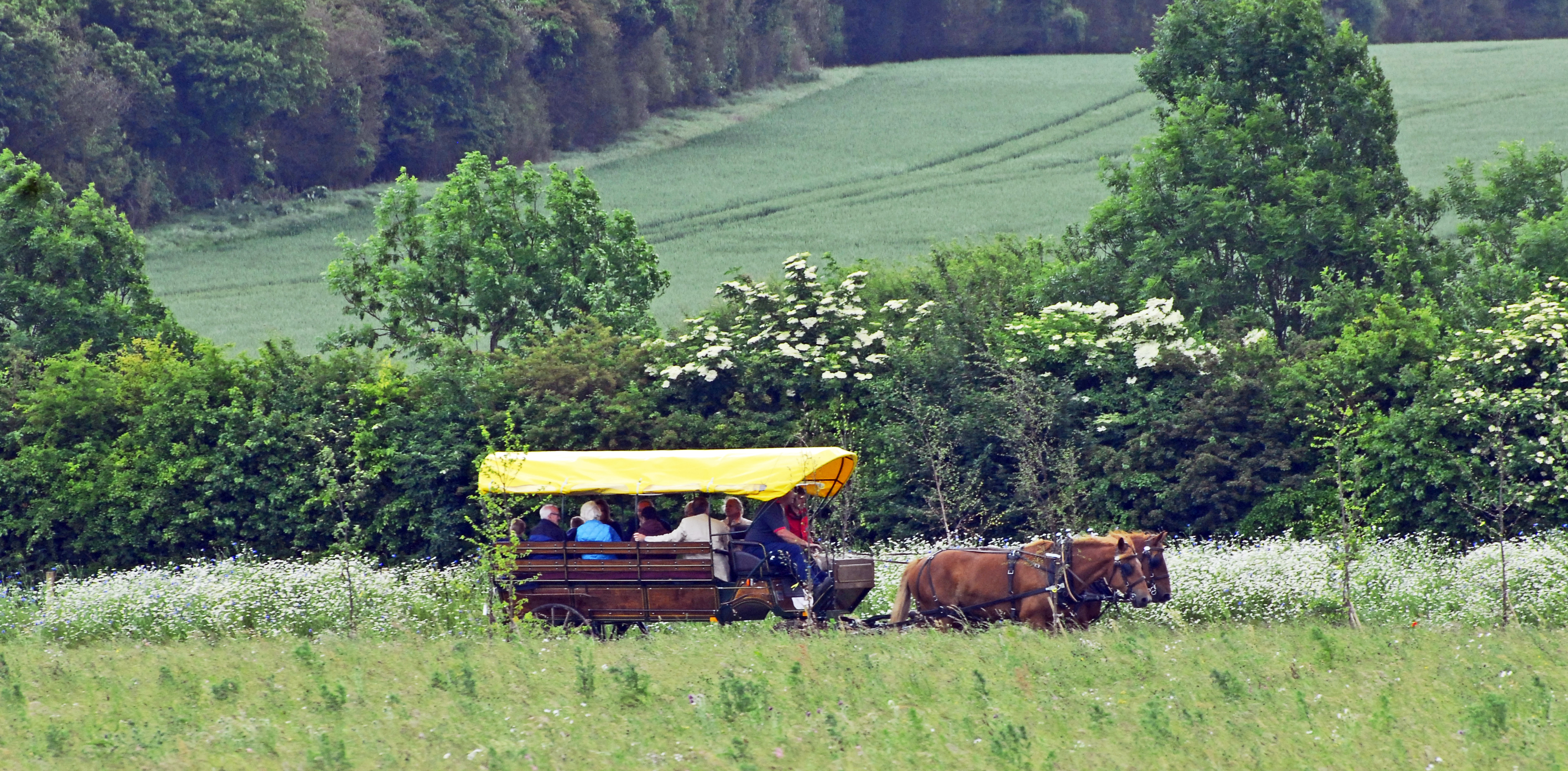 Carriage Ride at Clandon Wood