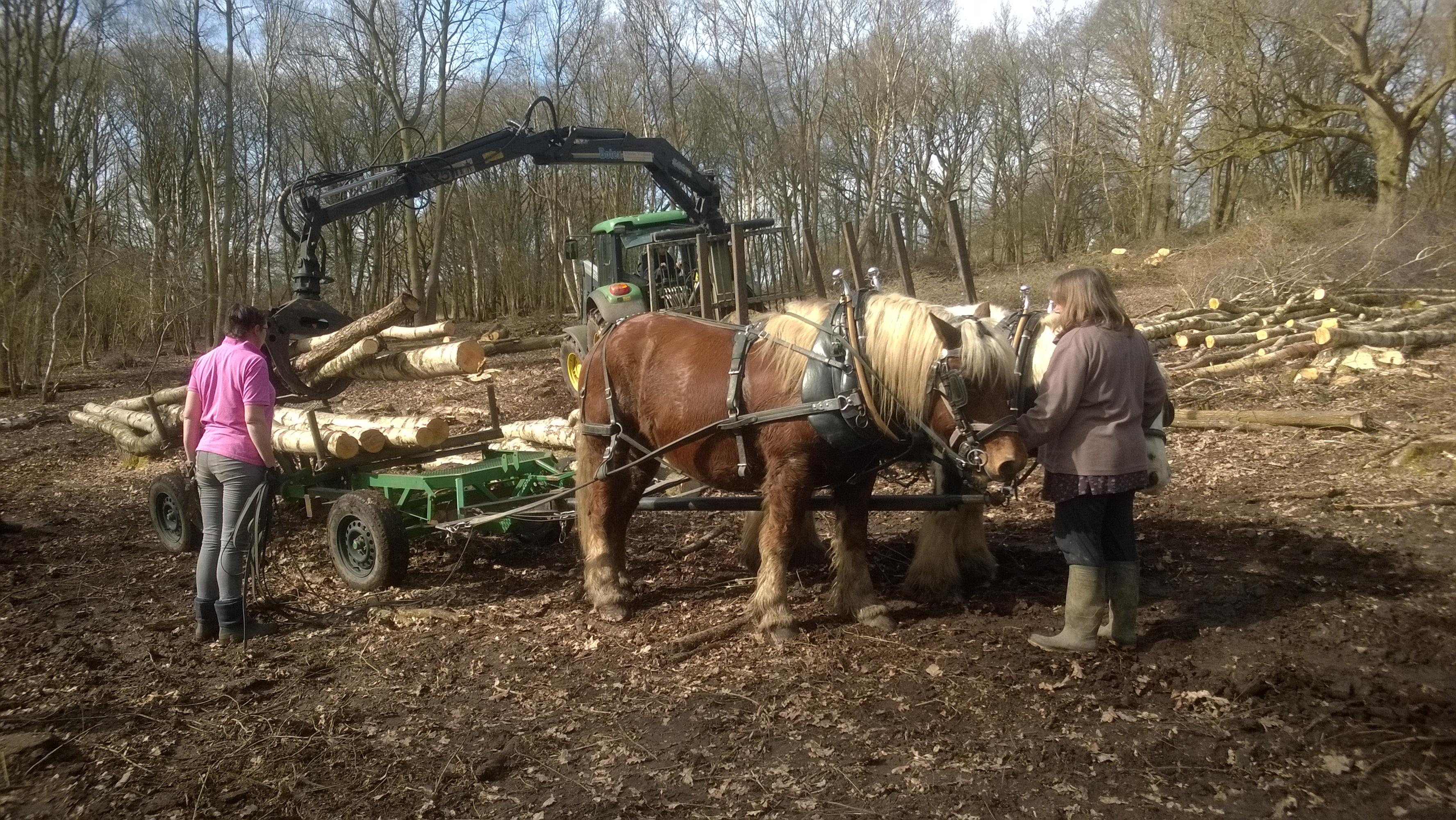 Timber Crane